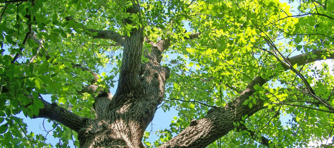 Why Spring Is The Best Time To Contact An Arborist