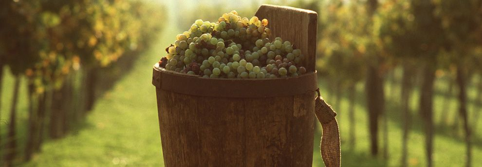 Legal features of the winemaking business in Ukraine: advices