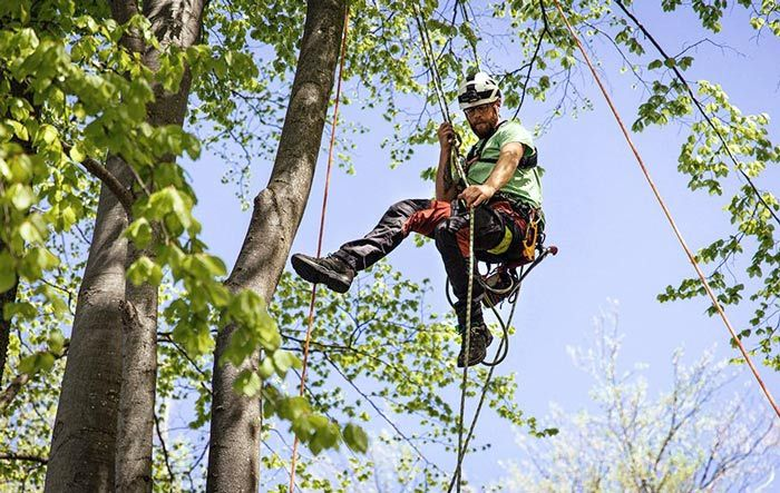 Implementing An Equipment Maintenance Schedule As An Arborist