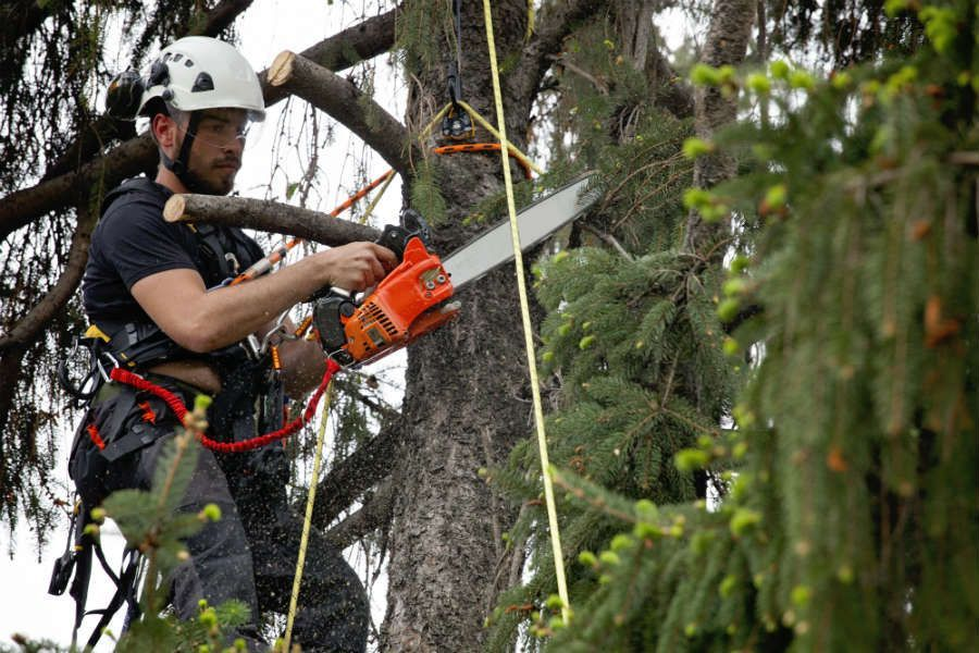 Keeping Tree Care Workers Safe