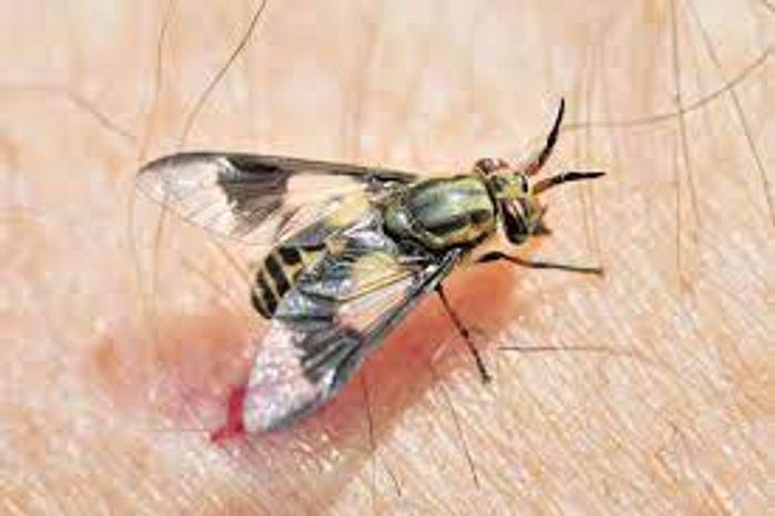 Get Flies control services in Dubai